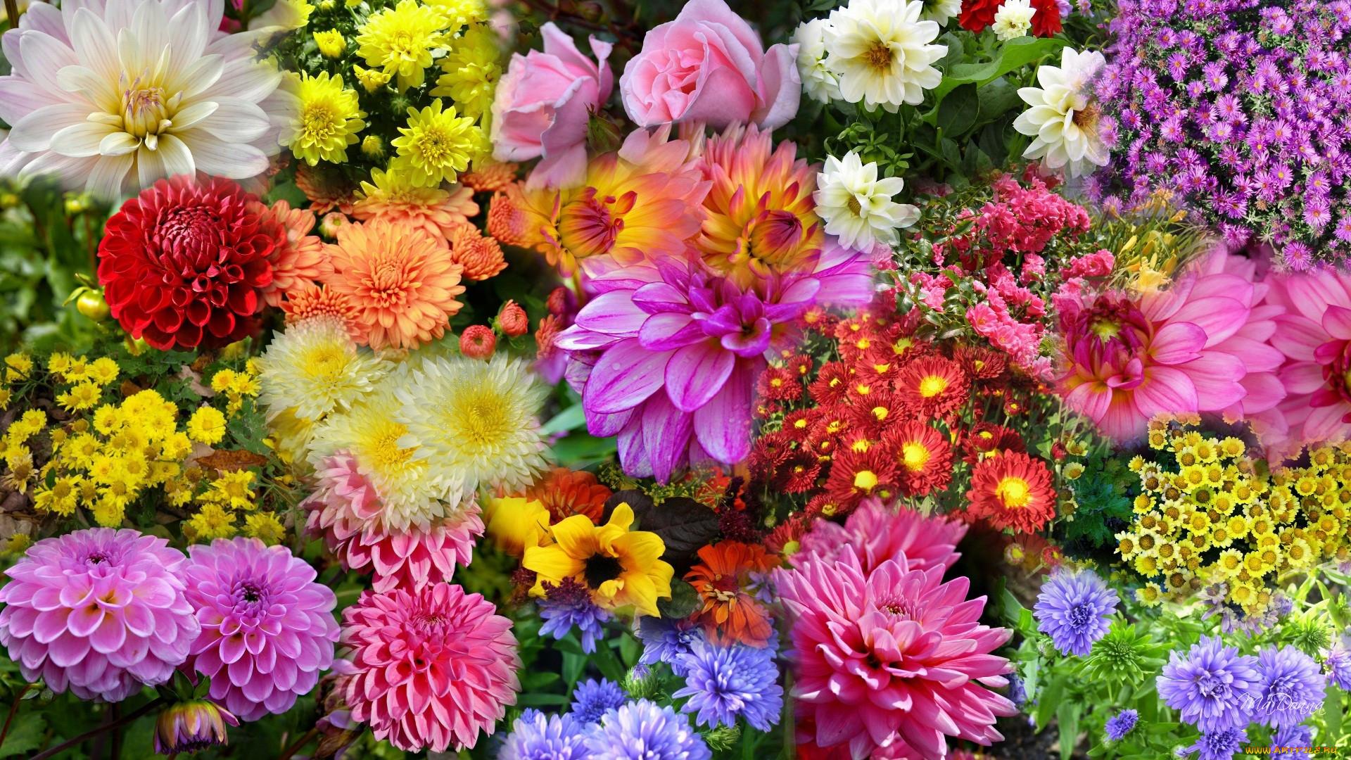 картинки для рабочего стола садовые цветы бани